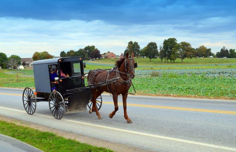 Amish ludzie w koniu i powoziku obraz stock