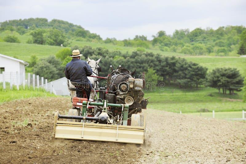 Amish mężczyzna Kultywuje Jego Śródpolnego zdjęcia stock