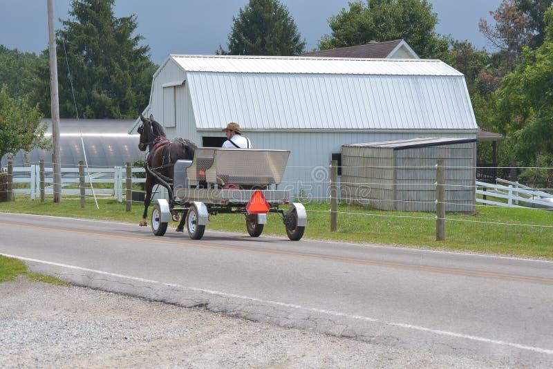 Amish man som kör vagnen arkivbild