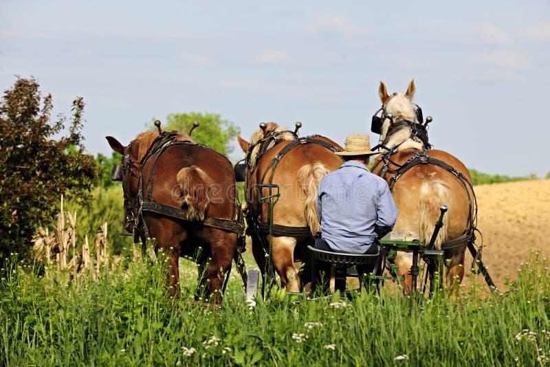 Amish man som plogar med 3 hästar fotografering för bildbyråer