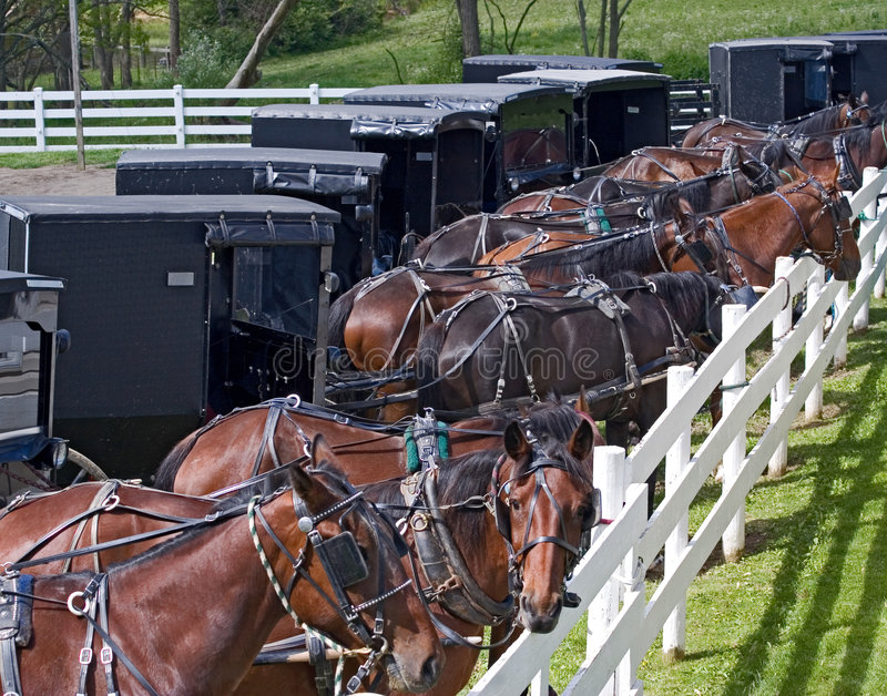 Amish Parking Lot. Horse drawn carriages parked at an Amish auction in Berlin, Ohio royalty free stock photos