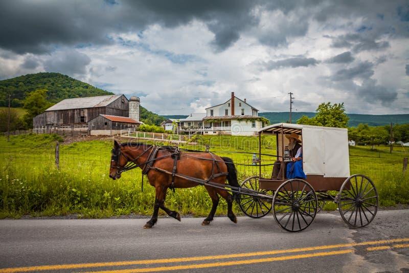 Amish powozik z białym wierzchołkiem i brąz zgłębiamy obraz royalty free