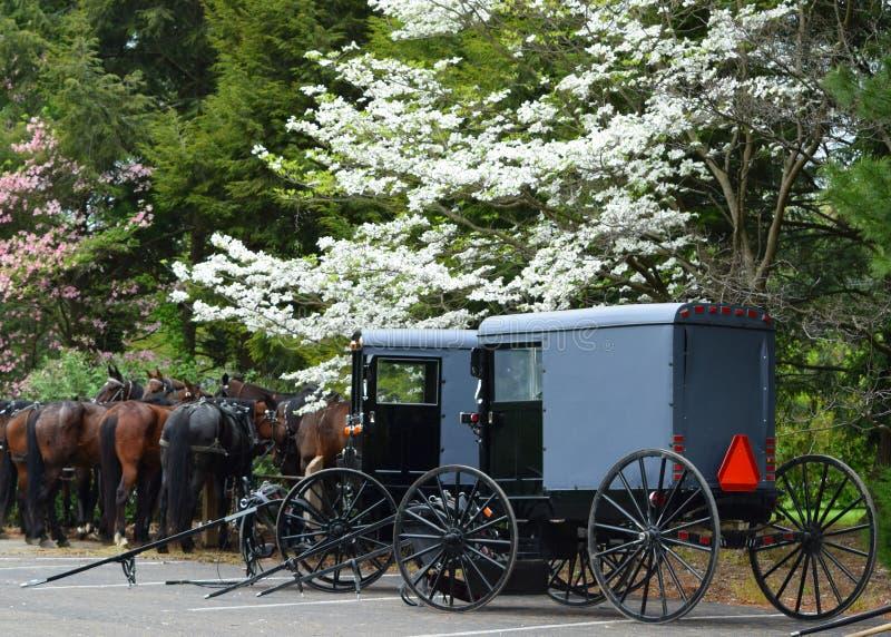Amish powoziki w Lancaster i konie, PA obraz royalty free