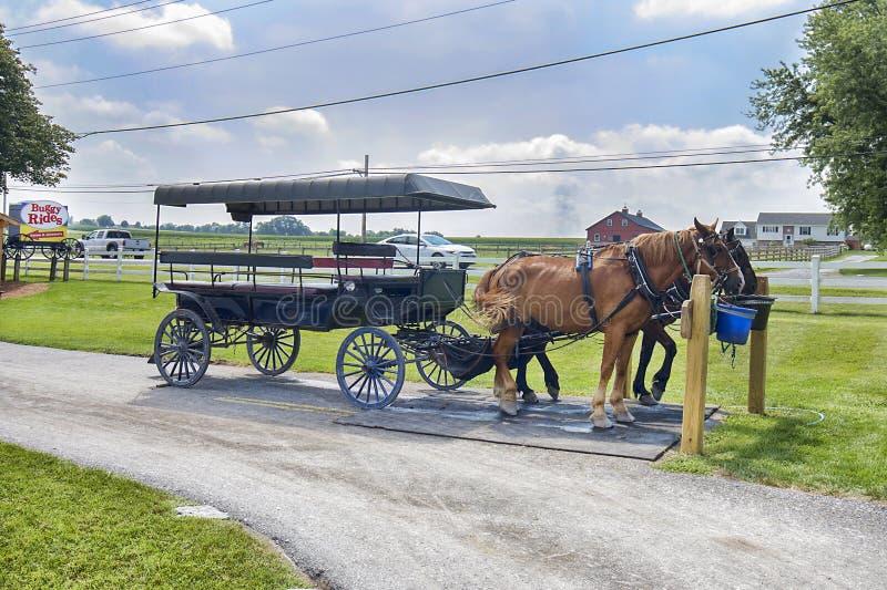 Amish przejażdżki Zapluskwione wycieczki turysyczne zdjęcie stock