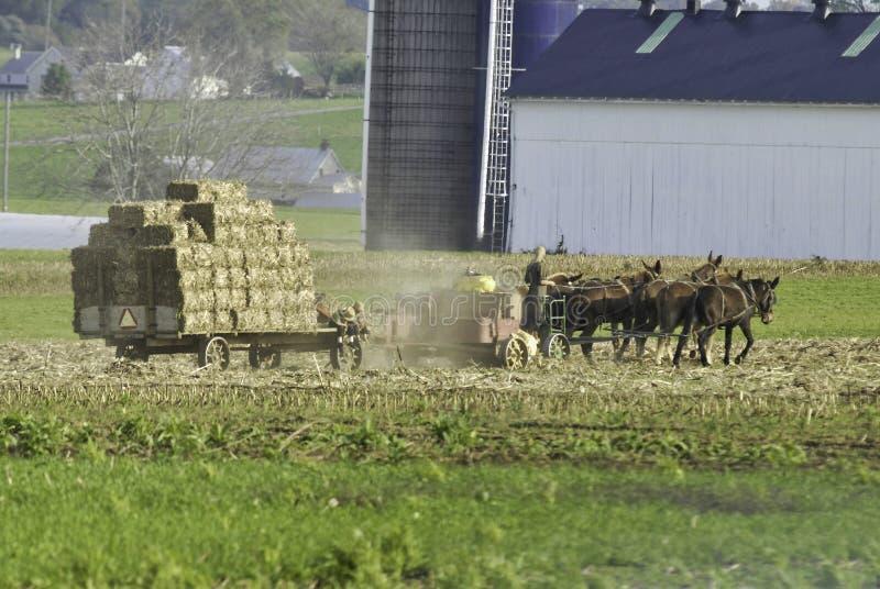 Amish rodzina Zbiera pola na jesień dniu obraz stock