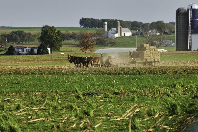 Amish rodzina Zbiera pola na jesień dniu obrazy royalty free