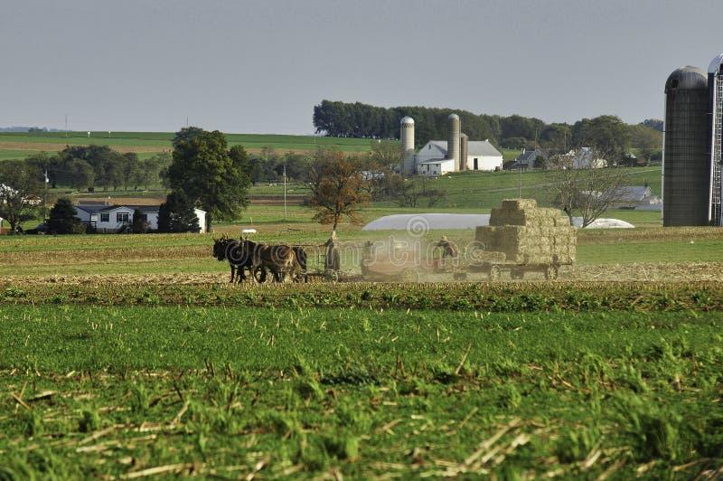 Amish rodzina Zbiera pola na jesień dniu zdjęcia royalty free