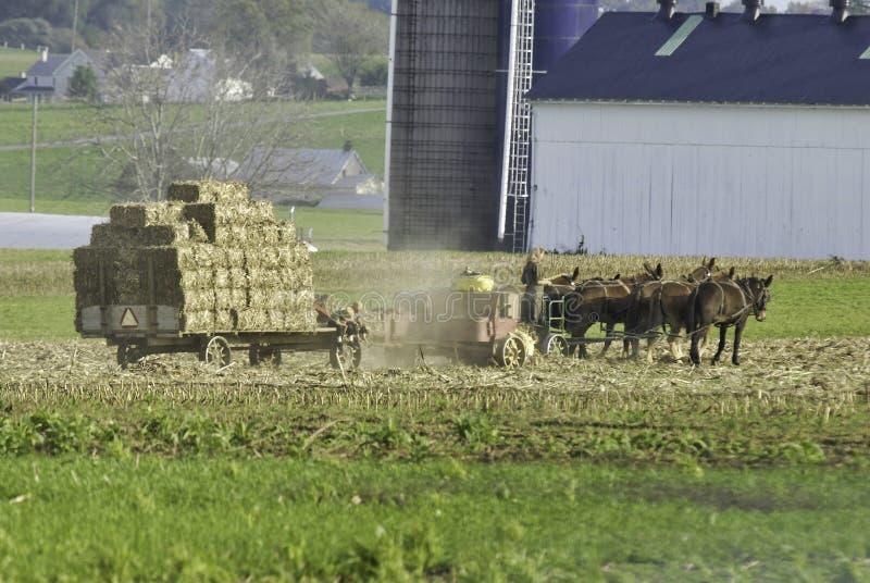 Amish rodzina Zbiera pola na jesień dniu fotografia royalty free