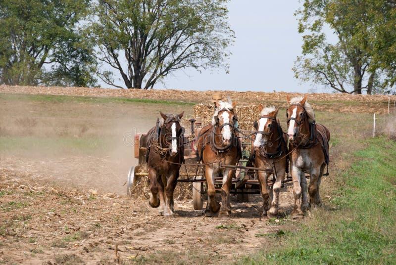 Amish rolników Orać zdjęcia stock