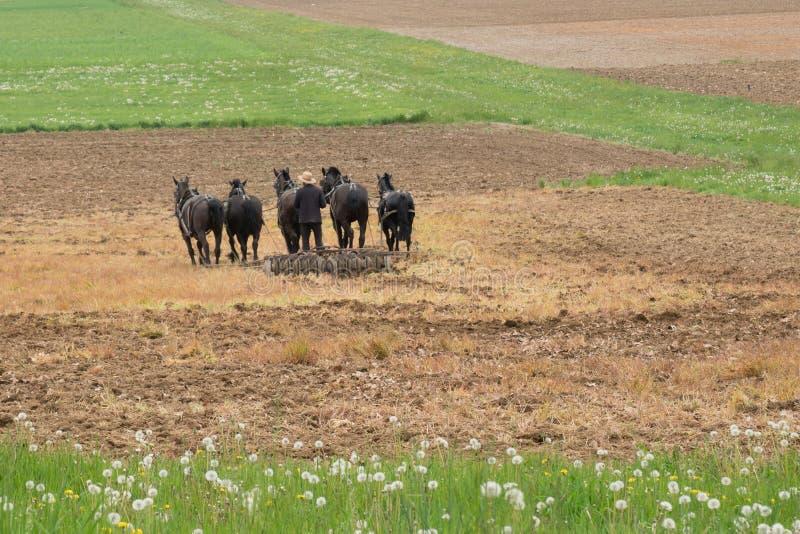 Amish rolnik z koniami zdjęcie royalty free