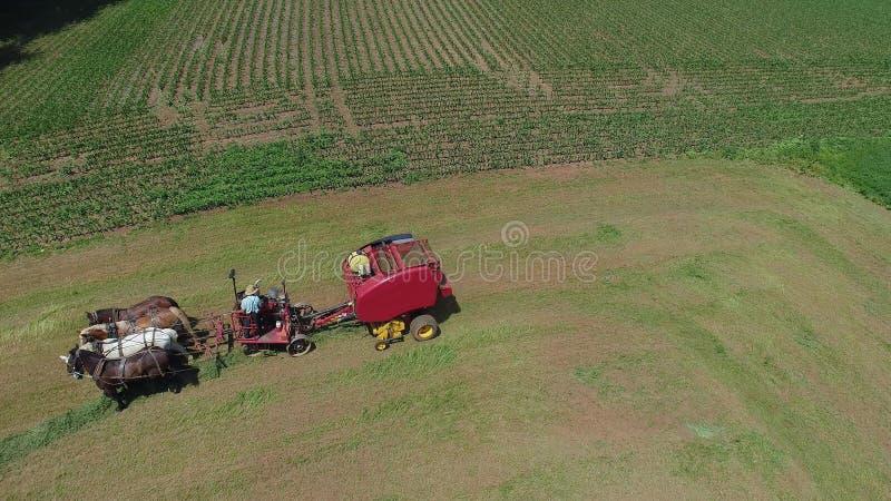 Amish rolnik Zbiera Jego uprawy z 4 koniami i Nowożytnym wyposażeniem obrazy royalty free