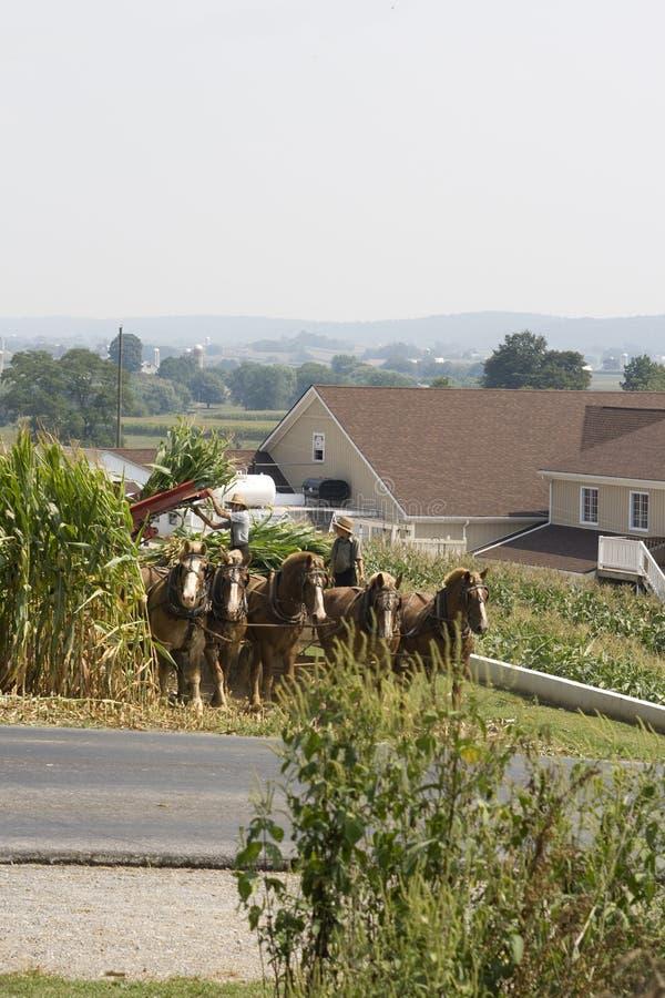 amish rolnika syn fotografia stock