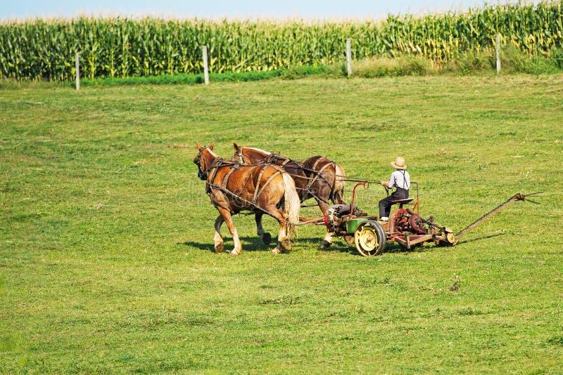 Amish Uprawiać ziemię zdjęcie stock