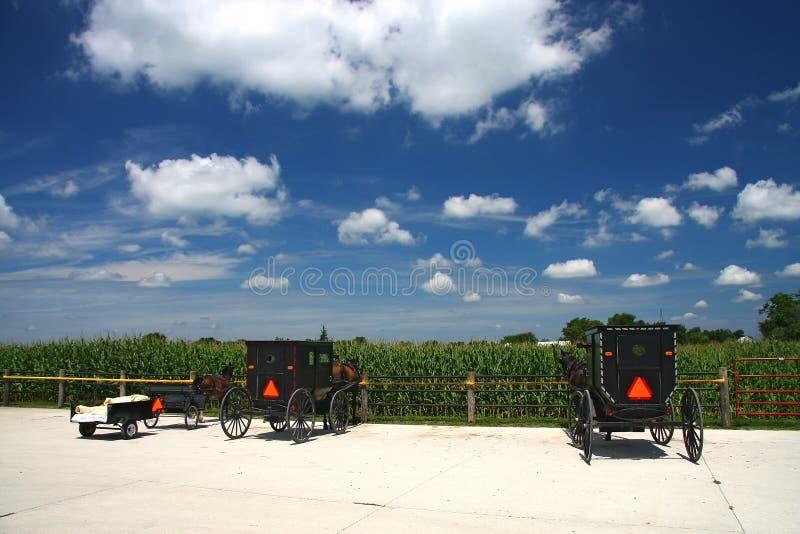 Amish vagn royaltyfri foto