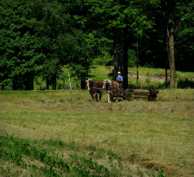 Amish Workday royalty free stock photography