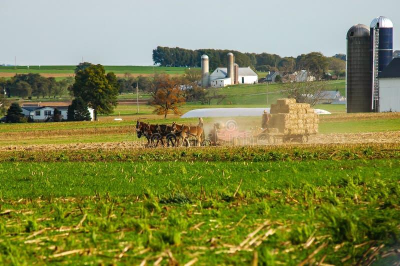 Amishfamilie die de Gebieden op Autumn Day PT 5 oogsten royalty-vrije stock foto's
