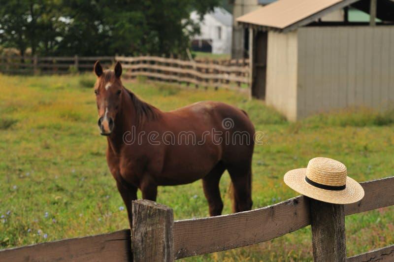 Amishhoed in paardlandbouwbedrijf stock foto