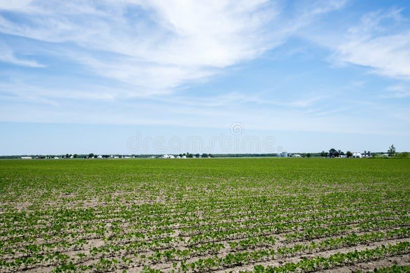 Amishlandbouwbedrijf en sojaboongebied, gebouwen, gewas, stock afbeelding