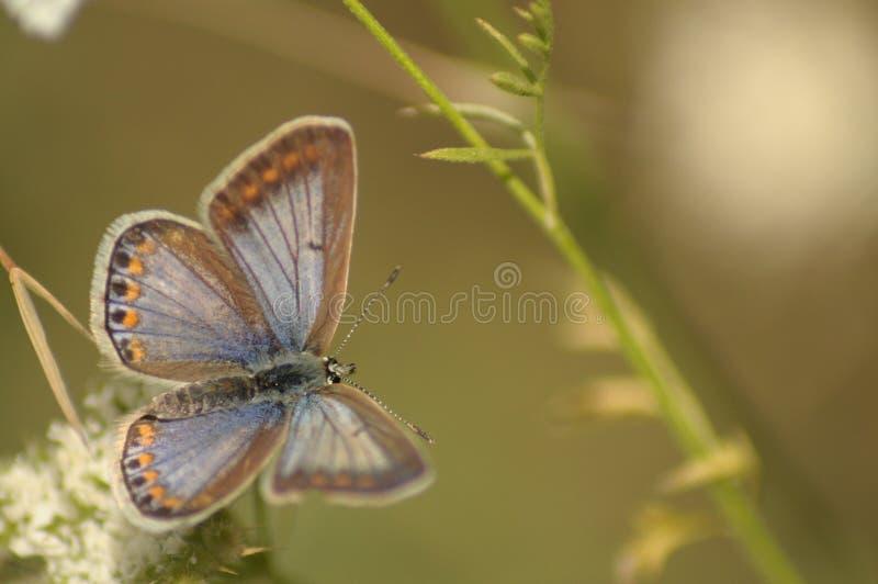 Amistad de las mariposas fotografía de archivo libre de regalías