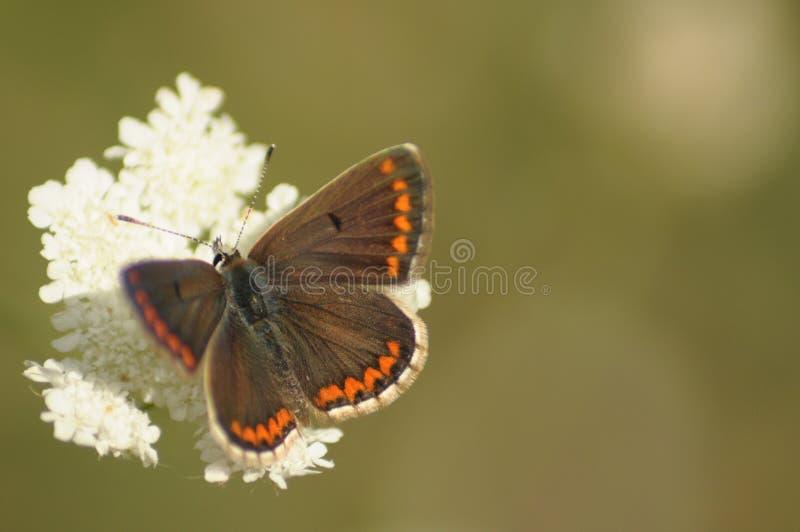 Amistad de las mariposas foto de archivo