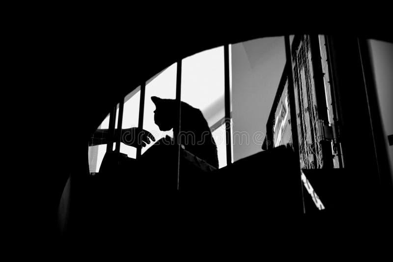 Amistad del gato y del ser humano fotografía de archivo