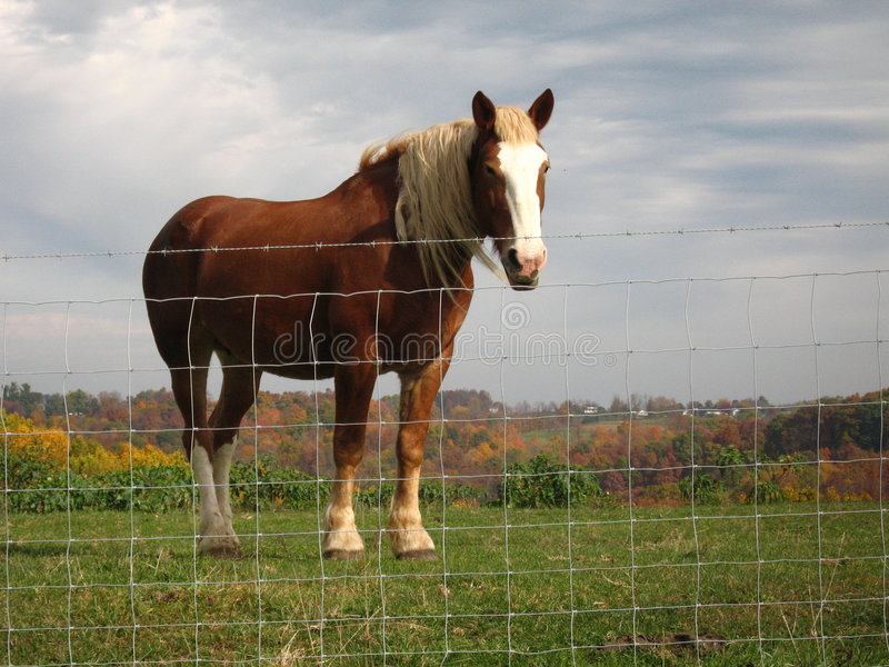 amisze farmy pracy obraz royalty free