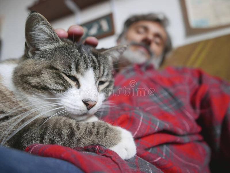 Amitié de chat et d'homme photo stock