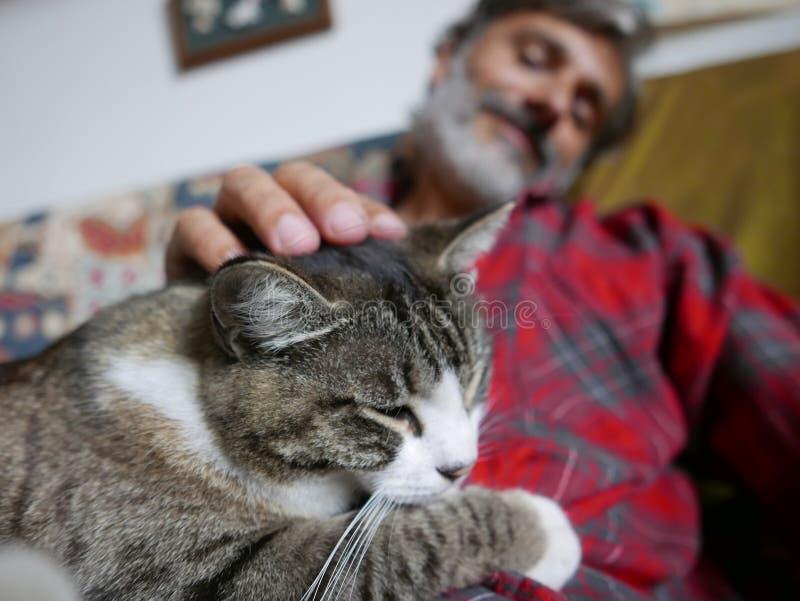 Amitié de chat et d'homme image libre de droits
