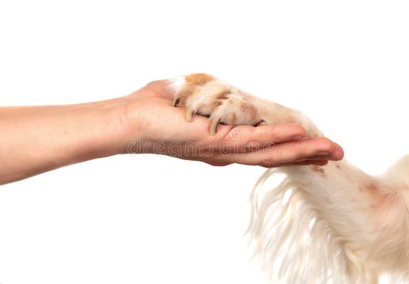 Amitié entre un chien et son propriétaire photos libres de droits