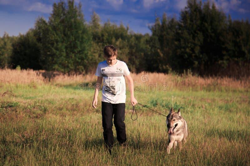 A amizade de um menino e de um animal selvagem a lealdade de um lobo fotos de stock royalty free
