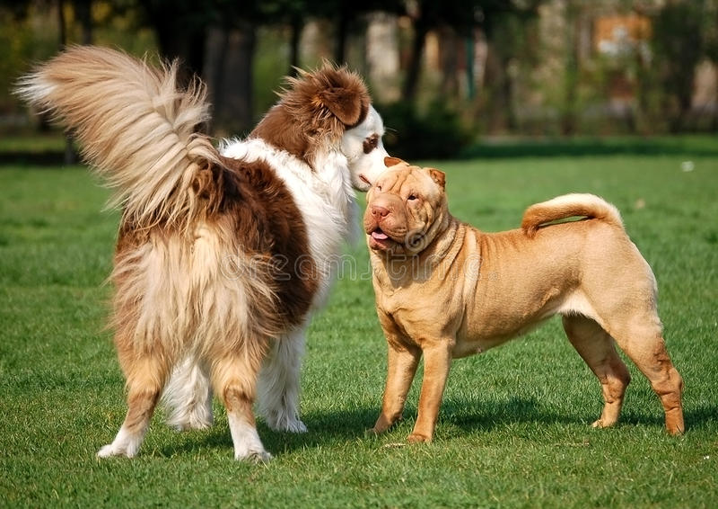 Amizade do cão imagem de stock royalty free