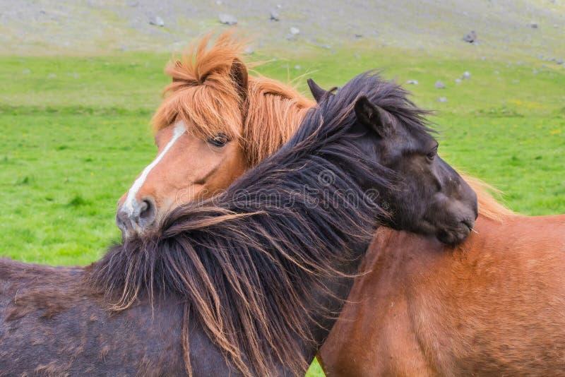 Amizade do cavalo fotos de stock royalty free