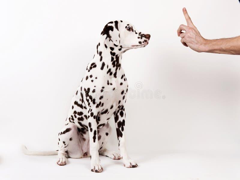 Amizade e parceria entre o homem e o cão -- isolado no branco imagens de stock