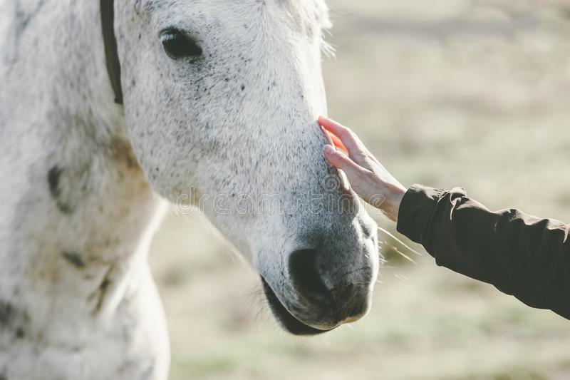 A amizade tocante do animal e dos povos do estilo de vida da mão da cabeça de cavalo branco viaja imagens de stock