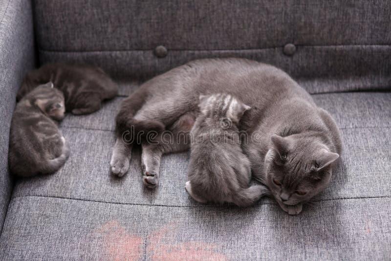 Amma för katt arkivfoton