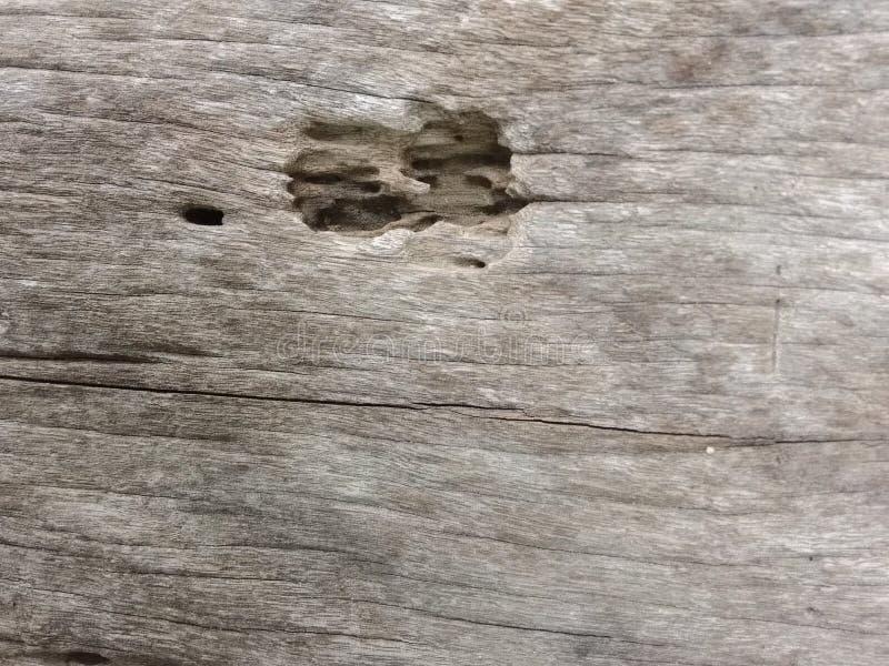 Ammaccatura di legno fotografie stock