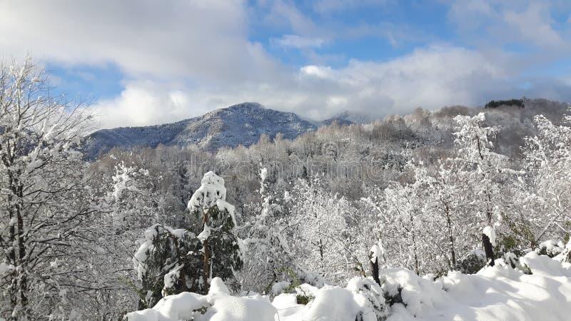 ammerbach德国获得草耶拿牧场地绵羊雪图林根州在谷walley冬天之下 免版税图库摄影