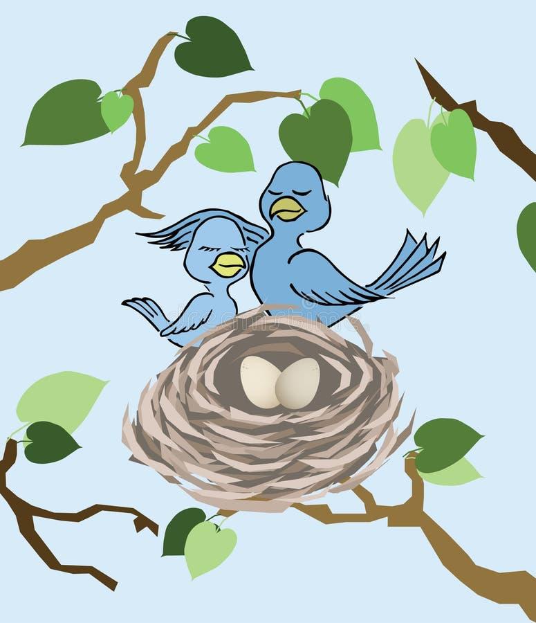 Ammirare il nido fotografia stock libera da diritti