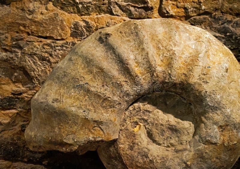 Ammonit som är fossil- mot stenväggen fotografering för bildbyråer