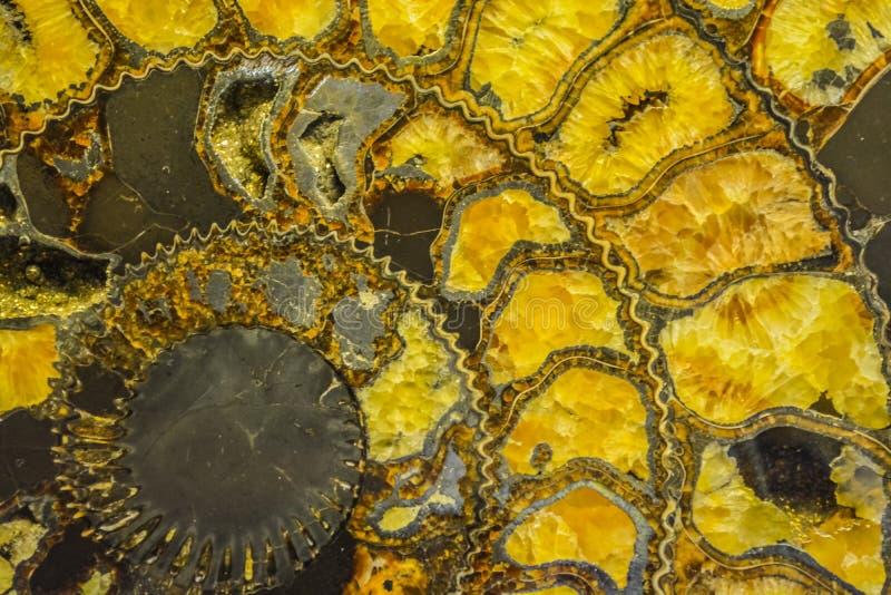 Ammonite πολύτιμων λίθων υπό μορφή σπείρας, χρωματίζει κίτρινο με το χρυσό Ακριβό κόσμημα Υπόβαθρο ή σύσταση στοκ εικόνες με δικαίωμα ελεύθερης χρήσης