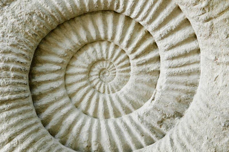 Ammonite προϊστορικό απολίθωμα στοκ εικόνες με δικαίωμα ελεύθερης χρήσης