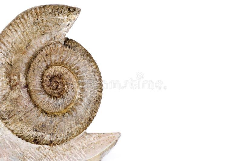 ammonite royaltyfria foton