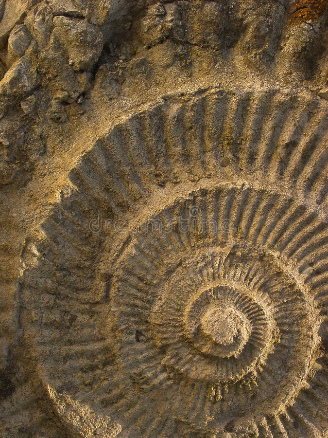 ammonite στοκ φωτογραφίες