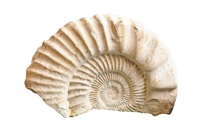 Ammonite Fossil Royalty Free Stock Photography