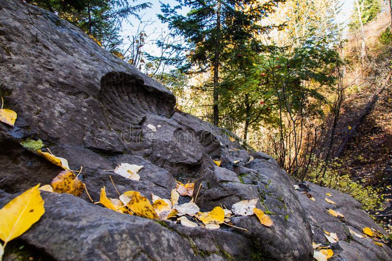 Ammonite Fossil hidden in the forest in fall time stock photo