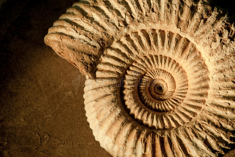 ammonitebakgrund arkivbild