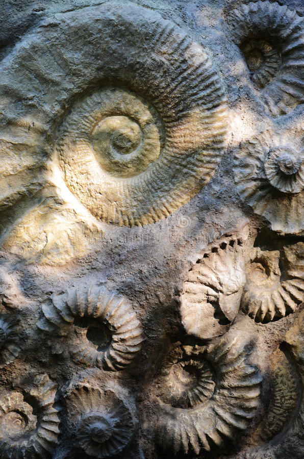 Ammonites στοκ φωτογραφία με δικαίωμα ελεύθερης χρήσης