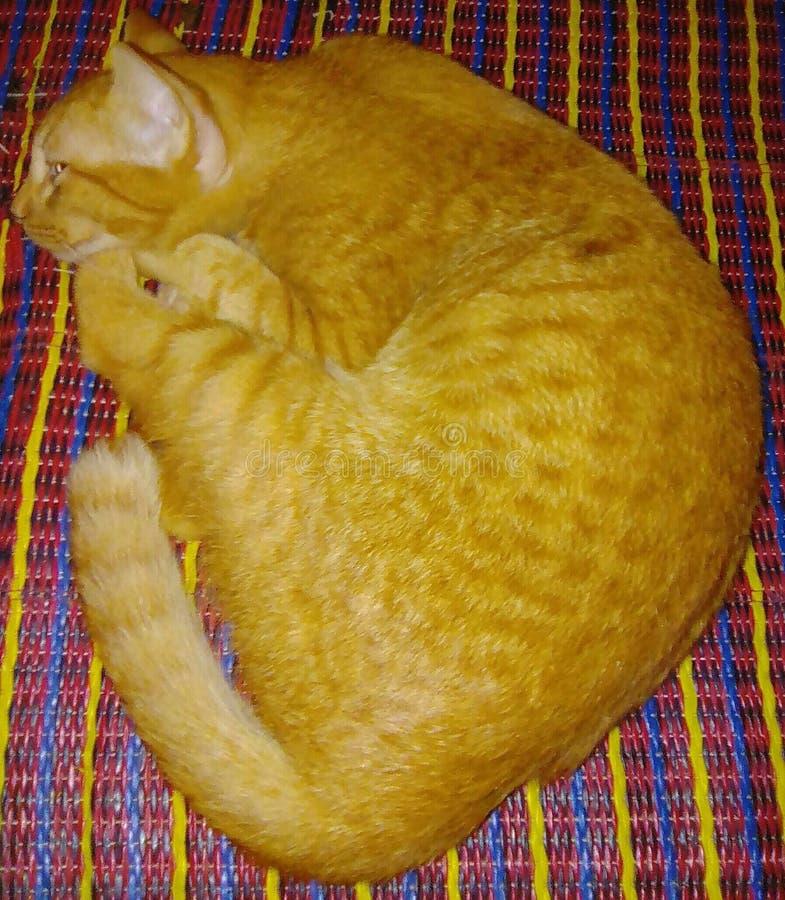 Amo el gato del oro de la señora imagenes de archivo