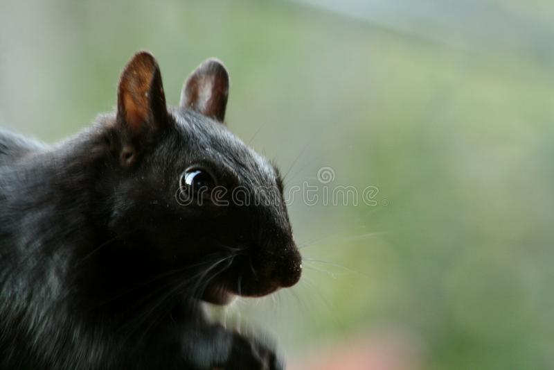 Amo gli scoiattoli fotografie stock libere da diritti