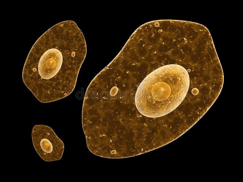 Amoebe op zwarte achtergrond stock illustratie